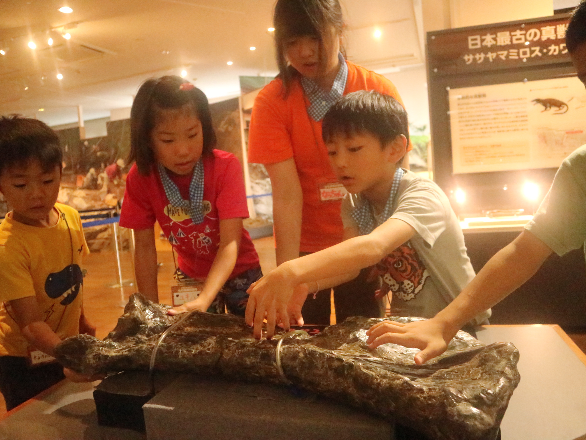 化石 (1)